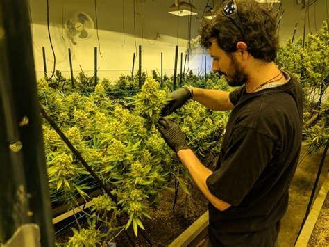 Best Cannabis online suppliers in USA